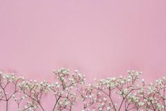 Граница чувствительных маленьких белых цветков на розовой предпосылке f Стоковые Изображения