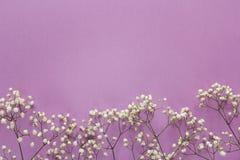 Граница чувствительных маленьких белых цветков на фиолетовой предпосылке Стоковая Фотография