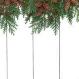 Граница Cypress кедра Стоковые Фотографии RF
