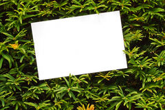 Граница topiary вала Yew Стоковые Изображения RF