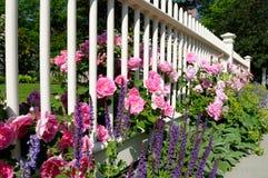 граничит розы Стоковые Фото