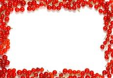 граничьте красный цвет смородины Стоковое Изображение
