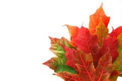 граничьте листья стоковые изображения rf