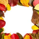 граничьте рамку красочных листьев осени на белизне Стоковое фото RF