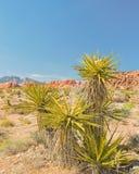 Грандиозный круг, зона консервации красного каньона утеса национальная, NV Стоковое фото RF