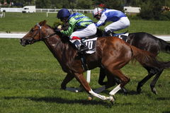 грандиозный лошади prague -го участвовать в гонке prix в июне Стоковая Фотография