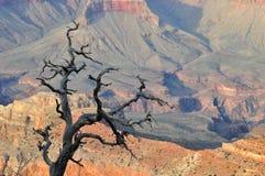 Гранд-каньон Аризона Стоковое Изображение RF