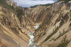 Гранд-каньон Йеллоустона стоковые фотографии rf