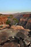 Гранд-каньон Стоковые Изображения RF