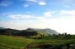график гористой местности капусты Стоковое Фото