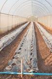 График плантации Стоковое Фото