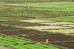 График разнообразия vegetable Стоковое фото RF