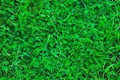 график травы Стоковое Изображение RF
