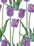 График цветет голубой тюльпан на белой предпосылке флористическая картина безшовная Стоковые Изображения