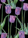 График цветет голубой тюльпан на черной предпосылке флористическая картина безшовная Стоковые Изображения