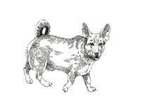 График чертежа чернил собаки Senceless Стоковое фото RF