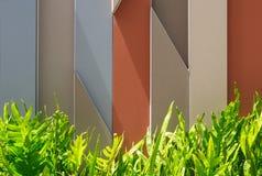 Графическая предпосылка с листьями папоротника в солнечном свете Стоковые Изображения RF