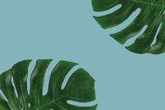 Графический состав листьев на покрашенной предпосылке Стоковые Фото