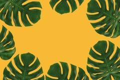 Графический состав тропических листьев Стоковые Изображения