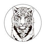Графический чертеж тигра Бенгалии wildlife большой кот иллюстрация вектора
