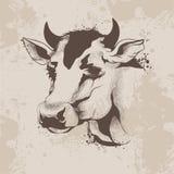 Графический чертеж чернил, делает эскиз к голове коровы Стоковое Изображение RF