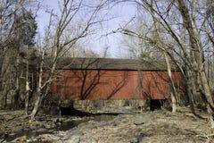 графство самецов оленя моста покрыло Пенсильванию Стоковое Изображение RF