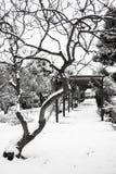 Грациозность зимы Стоковые Изображения