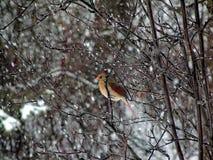 Грациозность зимы Стоковое Фото