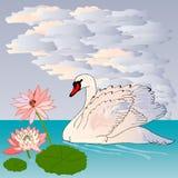 Грациозно и грациозно лебедь Стоковое Фото
