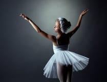 Грациозно маленький белый лебедь представляя в студии Стоковая Фотография