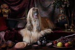 Грациозно собака афганской борзой в интерьере араба Стоковое Изображение