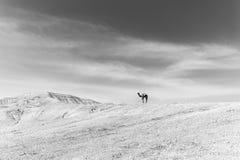 Гребень горы пустыни верблюда стоящий верхний, Израиль Стоковые Фото