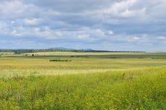 Гребень гор Ural с соснами Стоковое фото RF