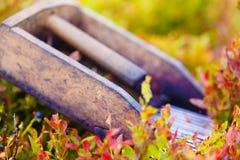 Гребень для выбирать голубики Красивые фото и предпосылка нерезкости Стоковая Фотография RF