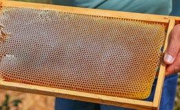 Гребень меда владением рук в рамке Стоковое Фото