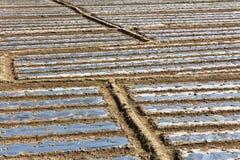 Гребень рисовых полей Стоковые Фото