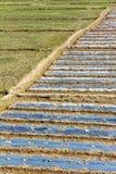 Гребень рисовых полей Стоковое Изображение RF