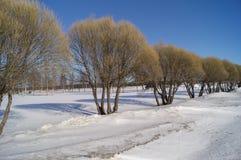 Гребите деревья Стоковые Фотографии RF