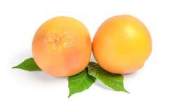 2 грейпфрута на белой предпосылке с зелеными листьями Стоковые Фотографии RF