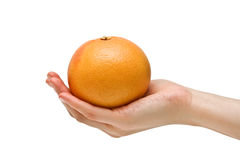 грейпфрут зрелый Стоковое Изображение