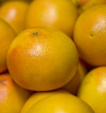 грейпфрут 2 Стоковые Фото