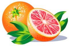 грейпфрут бесплатная иллюстрация