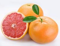 грейпфрут Стоковые Изображения