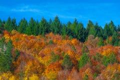 Грейте и лес уюта стоковые изображения rf