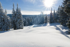 грейте на солнце зима стоковая фотография