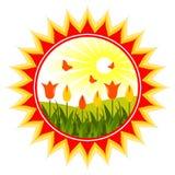 грейте на солнце тюльпаны Стоковое Изображение RF