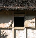 греть на солнце дома кота следующий к окну села Стоковая Фотография RF