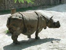 греть на солнце носорога стоковое изображение