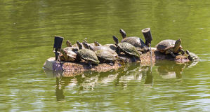 Греть на солнце черепах Стоковое фото RF