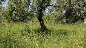 Греция май 2014: Остров Thasos видеоматериал